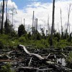 Kako pomoći očuvanju prirode