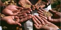 Nojeva barka semena